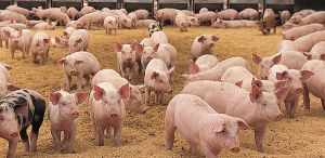 Diarrhoea in weaned piglets: Is a different approach needed?